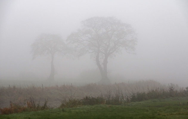 Nebel - Elke Riesmeier