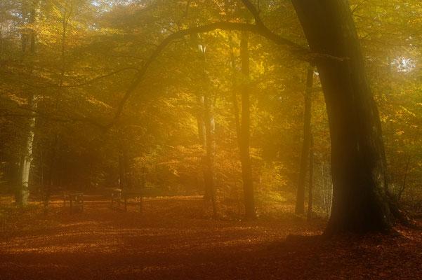 Herbst trifft Nebel im Hasbruch - Hans Katzenberger
