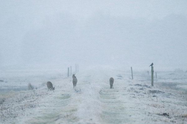 Winterliche Marschlandschaft - Ralf Ehben