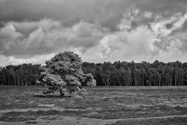 14 Heidelandschaft, Roland Zschornak