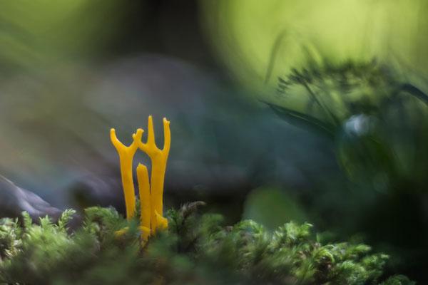 Mystischer Wald - Ingo Heymer