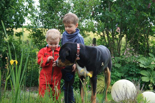Brutus Großer Schweizer Sennenhund und Kinder