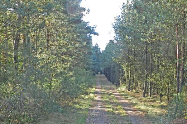 Дорога, где когда-то проезжали ГДР-овские пограничники.