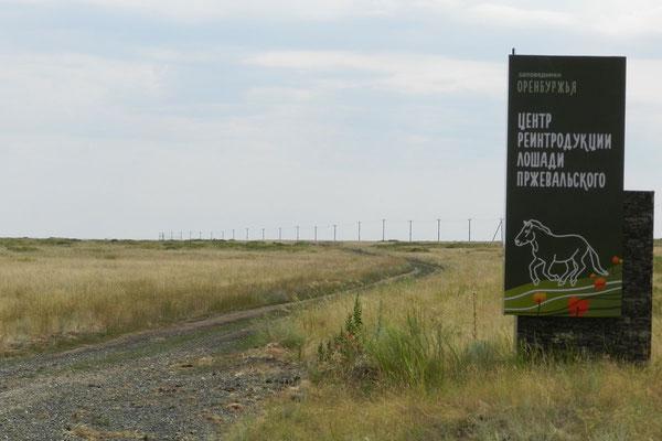 Wegweiser zum Wiederauswilderungsprojekt für Przewalski-Pferde