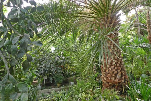 Palmen in der Tundra
