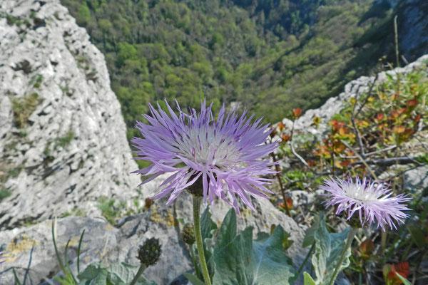 Blumen oberhalb der Agura-Schlucht