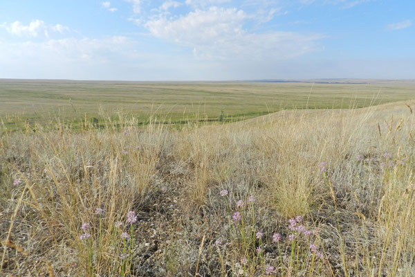 Kein Baum, kein Busch versperrt die Aussicht Richtung Kasachstan.