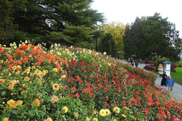 Даже осенью здесь десятки тысяч цветов