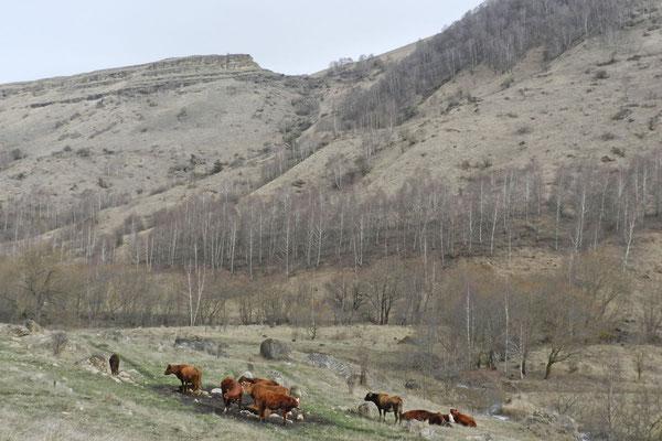 Keine anderen Wanderer sind hier unterwegs, nur ein paar Hirten und Kühe.