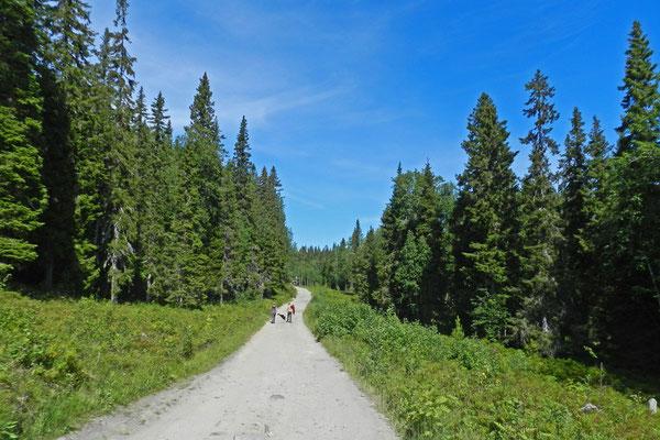 Unterwegs in den Wäldern der Solowki