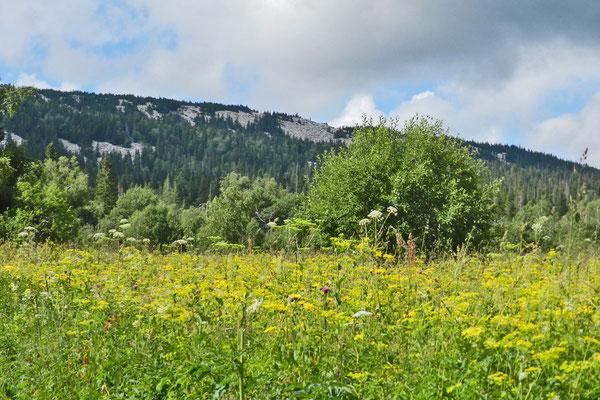 Millionen Wildblumen