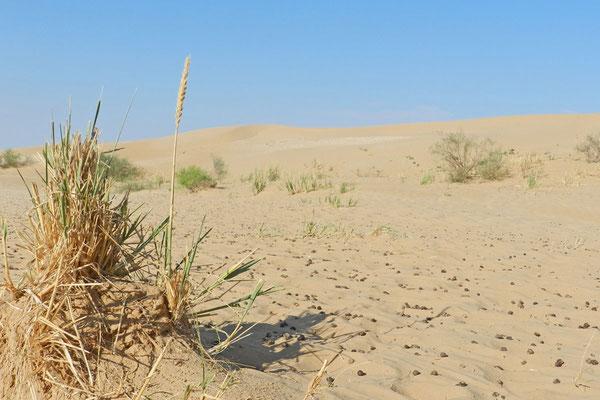 An der Wolga nördlich von Narimanow gibt es beeindruckende Dünen.