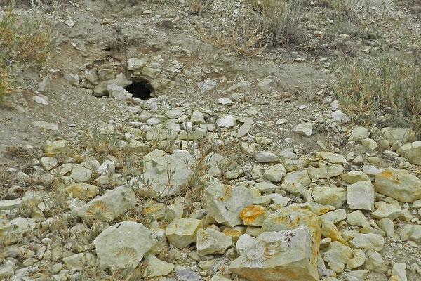 Hier wohnt das Paläontologen-Murmeltier.
