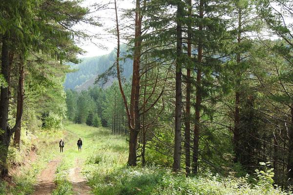 Kleine Wanderung im Wald