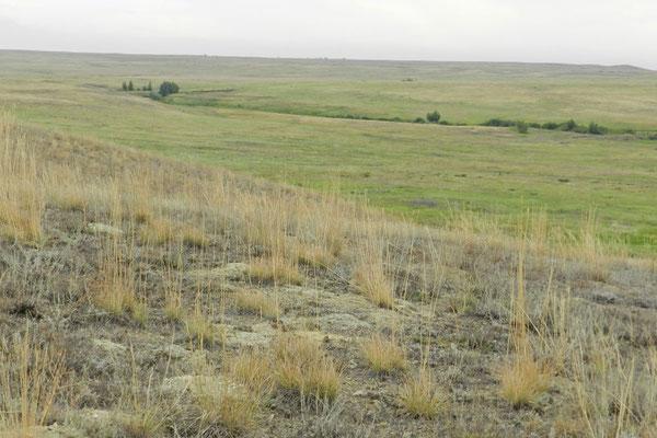 Grassteppe im Naturreservat