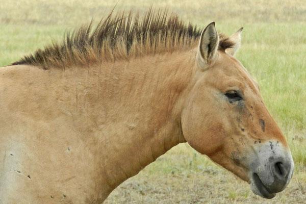 Jedes Wildpferd im Naturreservat hat senen Namen.