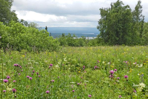 Sommerliche Blütenpracht der Uralberge