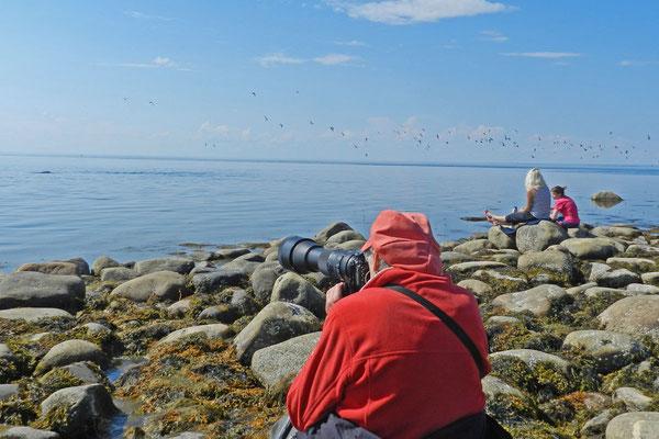 Wal-Touristen am Weißen Meer.