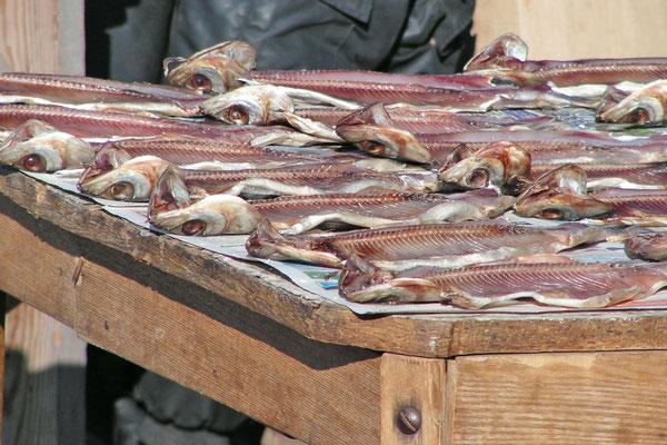 Getrocknete Fische - Wobla und andere Arten - sind ein gewöhnungsbedürftiger Snack in Russland.