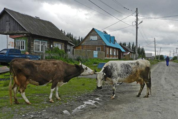 Manche Dorfbewohnr halten sich eine Kuh.