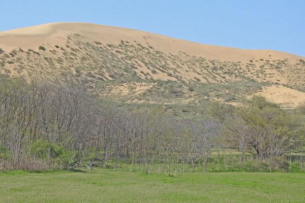 Blick auf die Sarykum-Düne von der Zufahrtsstraße
