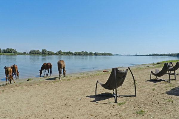 Am Hauptarm der Wolga gibt es einen rustikalen Strand für Menschen und Pferde.