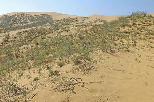 Sarykum - Die größte Düne Eurasiens