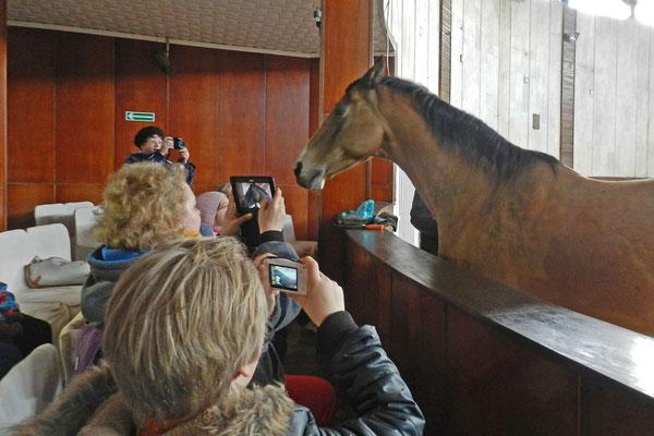 Manche Pferde haben keine Berühungsängste