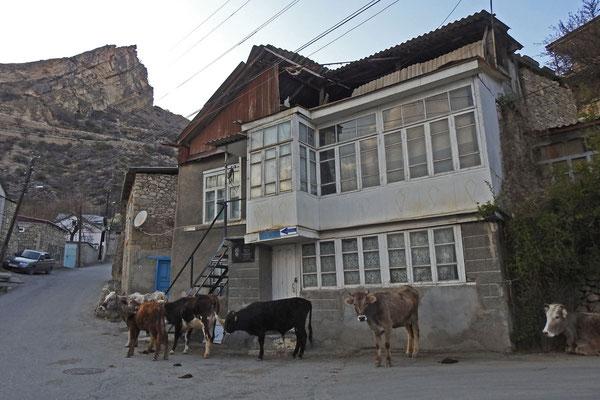 Viele Einwohner haben noch eigenes Vieh.