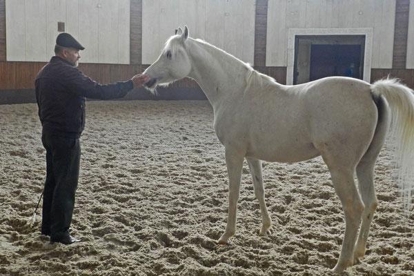 Eine Runde auf Putins persönlichem Pferde kostet 100 Rubel.