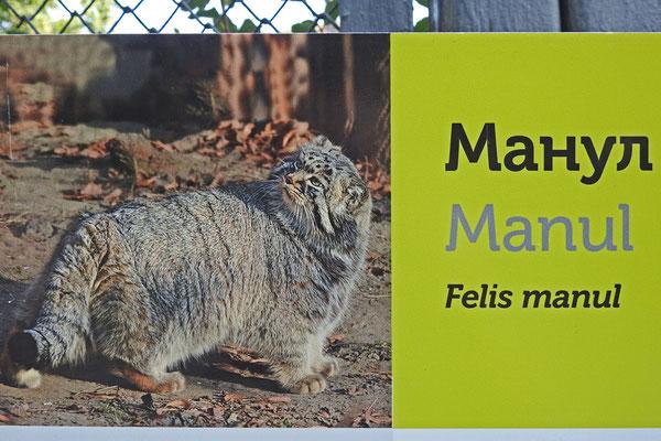 Der Manul, Maskottchen des Zoos, ist nicht zu sehen.