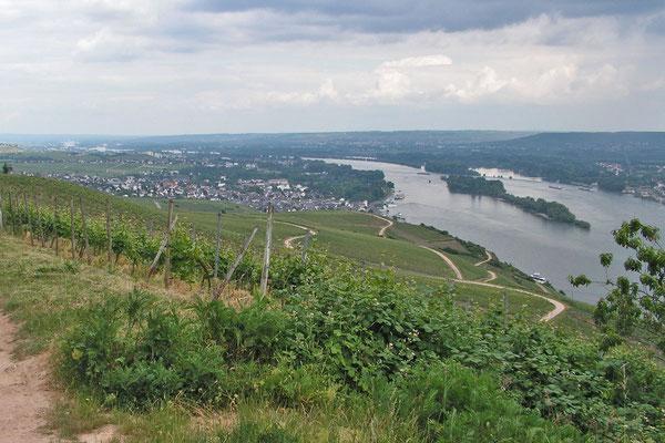 Виноградники рядом с Рюдесхаймом