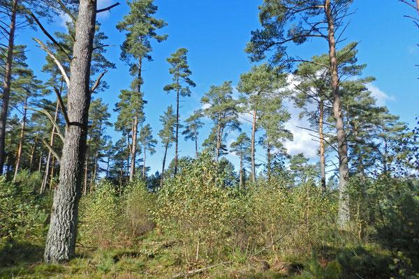 Лес на бывшей границе Востока и Запада.