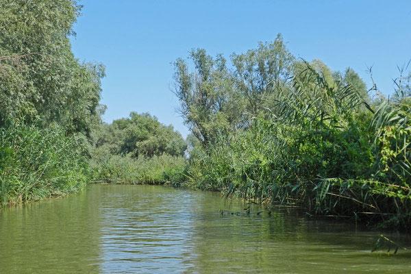 Mancherorts wirkt das Wolgadelta fast dschungelartig.
