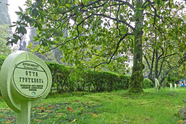 Otto Grotewohl durfte die erste Magnolie pflanzen.