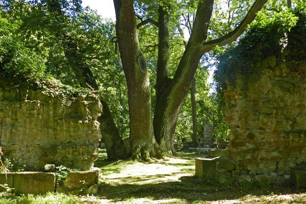 Деревья растут среди руин