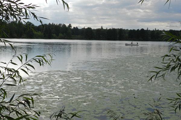 In diesem See gibt es angeblich nur noch stumme Frösche.