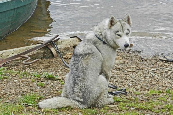 Herrchen angelt, Hund muss warten.