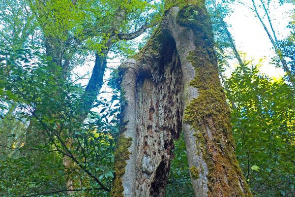 Im Tal wachsen immergrüne subtropisch Bäume