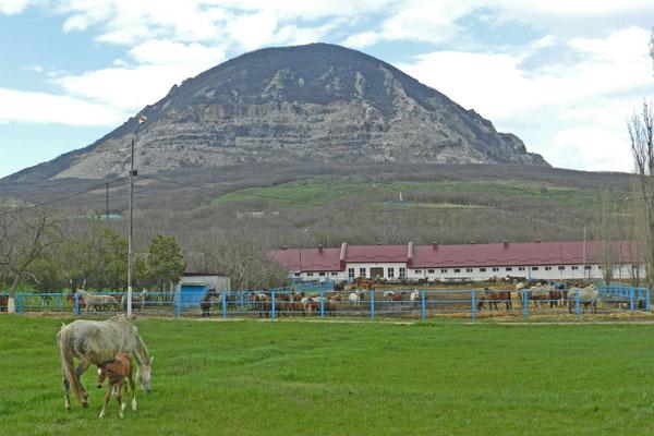 Pferdeställe vor dem mächtigen Smejka-Berg