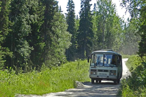 Gegenverkehr im Wald