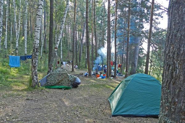 Zeltplatz unter Birken