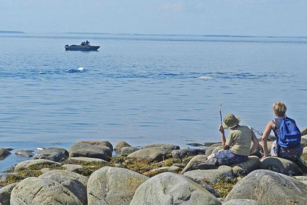 Manche Waltouristen kommen mit dem Boot