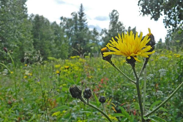 Blumenwiese am Öko-Pfad