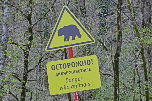 Warnung vor dem bissigen Bären