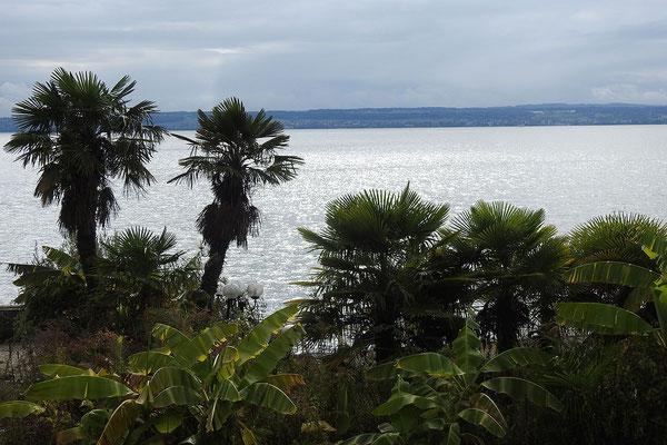 Пальмы у берега озера