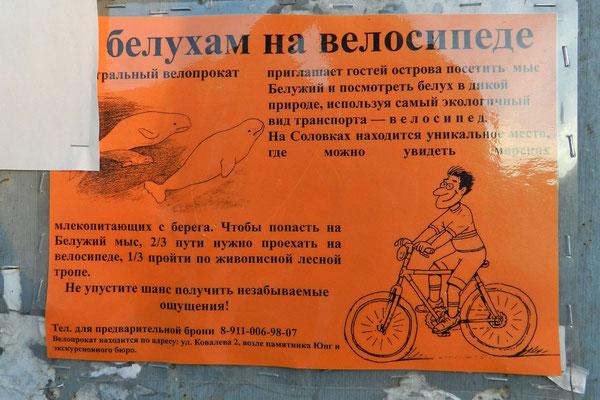 Belugawal-Werbung für Leihfahrräder