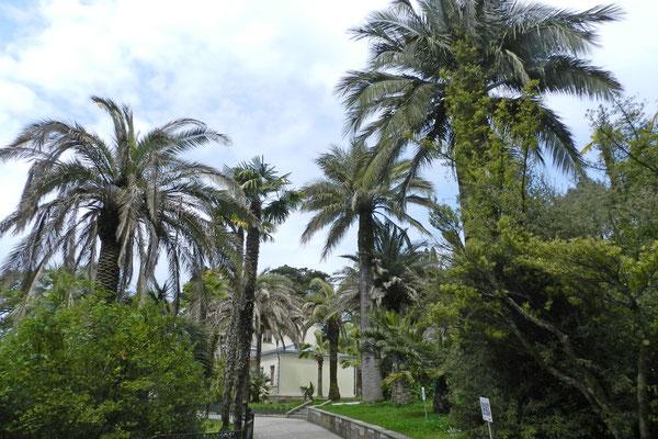 Palmen vor der Villa von Sergej Chudekow