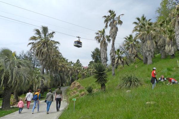 Auf dem Gelände des Dendrariums in Sotschi verkehrt sogar eine Seilbahn.