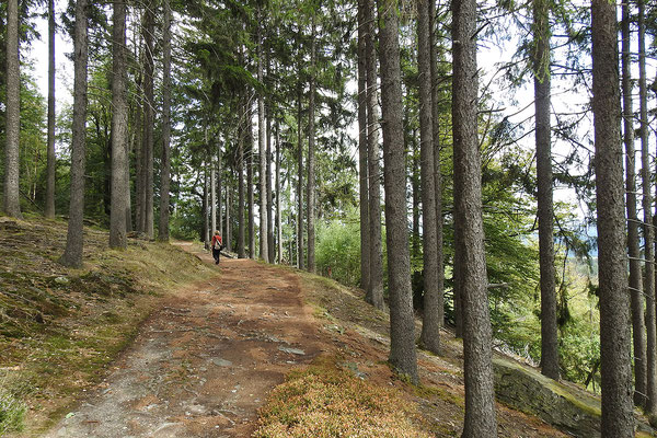 Еловый лес на северо-востоке парка.